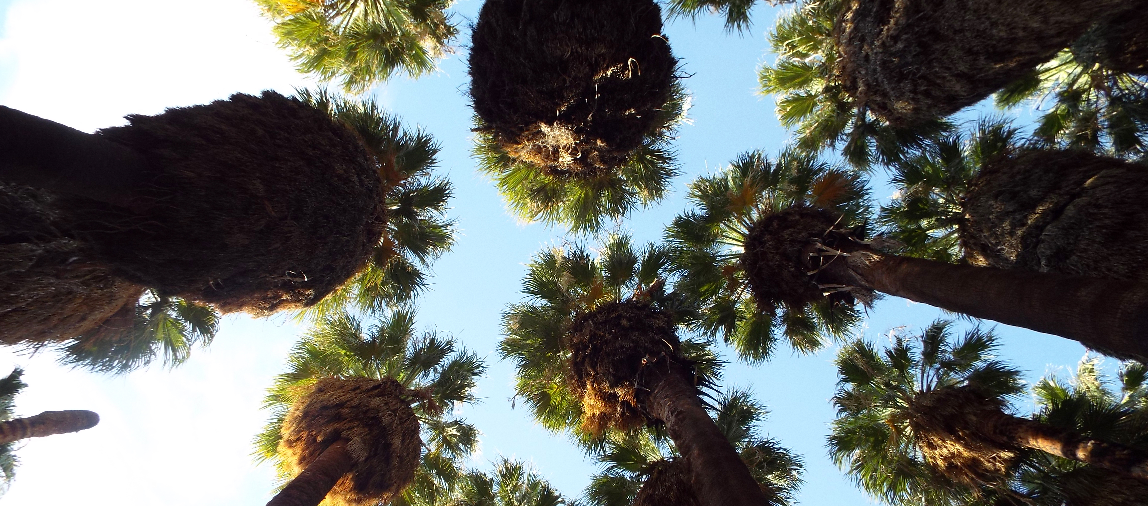 Palms Looking Up